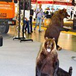 Уральские медведи на СТТ-2013, или новые автоподъемники из Перми
