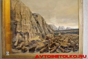 muzej_arktiki_02_2017_leokuznetsoff_img_5822