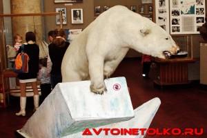 muzej_arktiki_02_2017_leokuznetsoff_img_5889