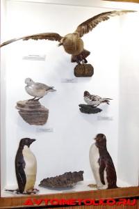 muzej_arktiki_02_2017_leokuznetsoff_img_5975